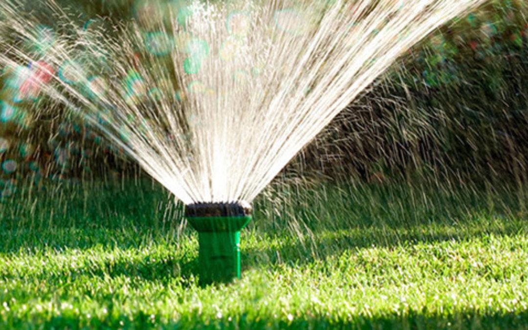Comment avoir une belle pelouse cet été