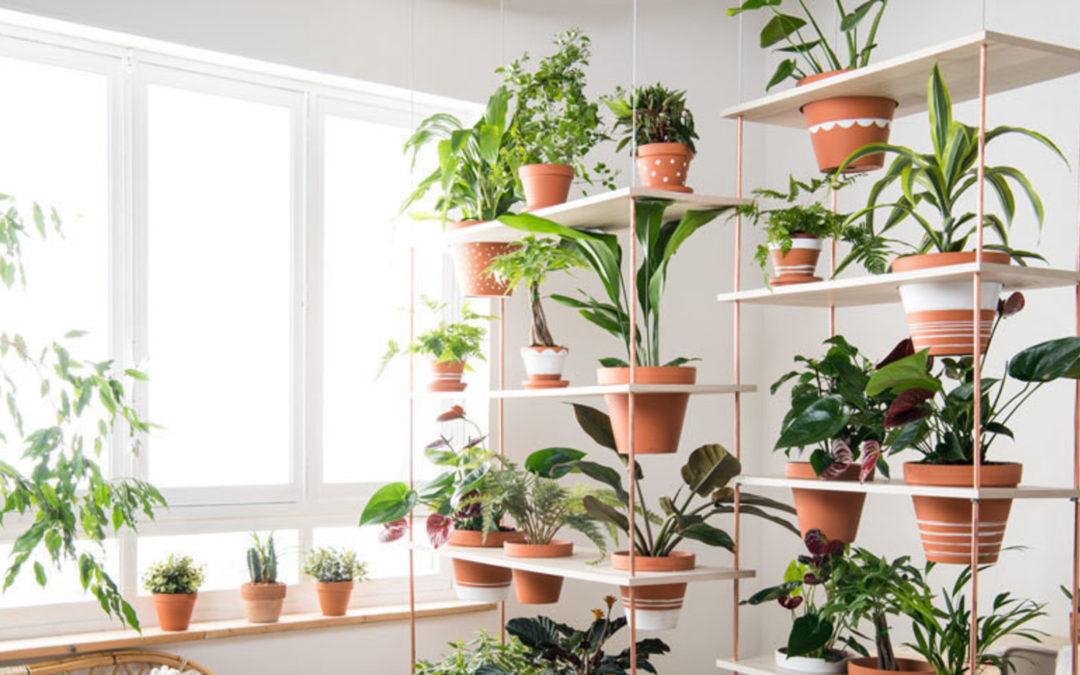 Comment réaliser un mur végétal