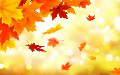 Découvrez nos conseils pour votre jardin en octobre